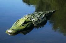 Polystyrene and fibreglass alligator